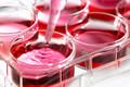 Brustvergrößerung Stammzellen Alternative